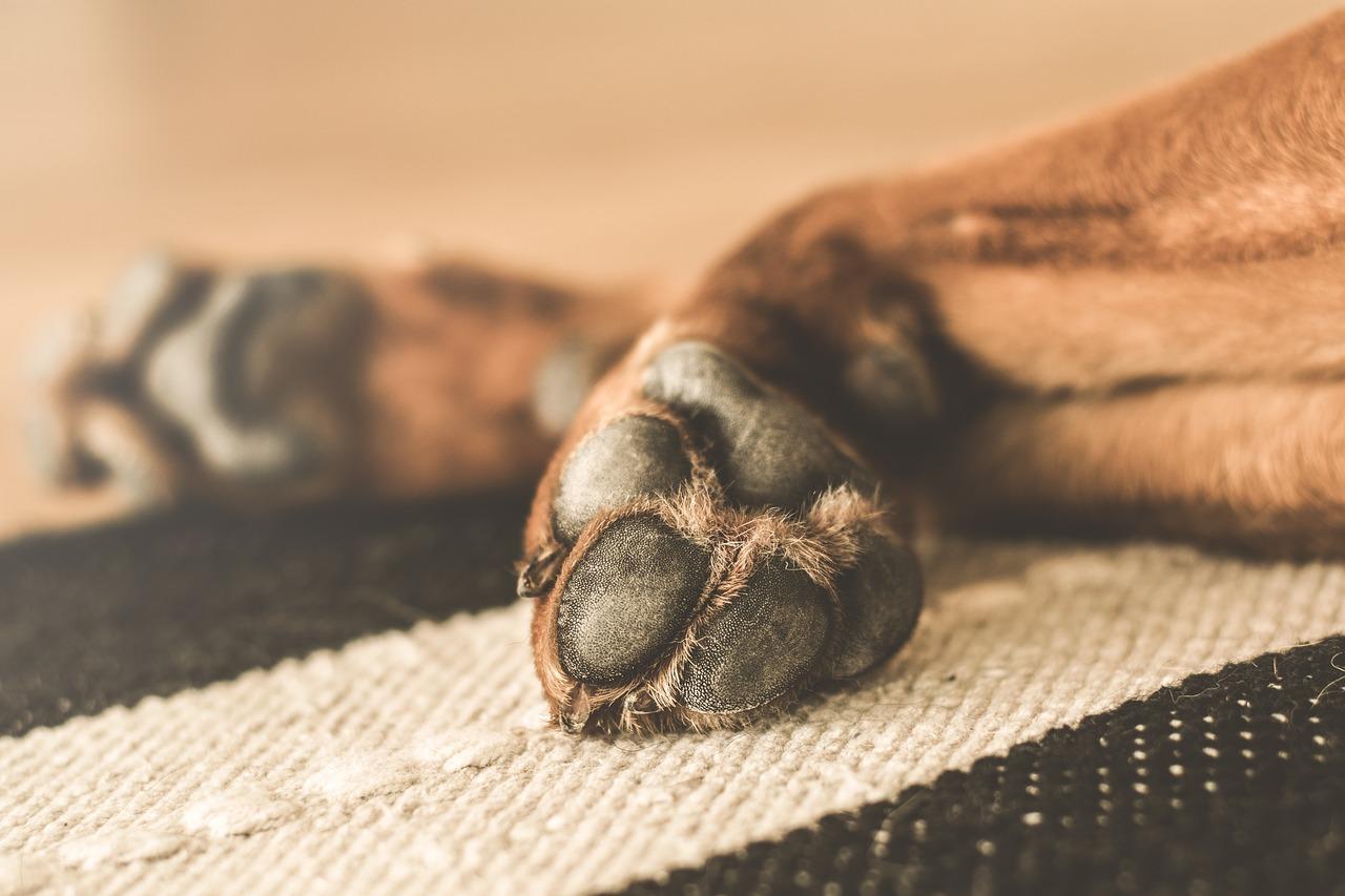 Na pomoc psim łapkom! Czyli jak przetrwać zimę z czworonogiem?