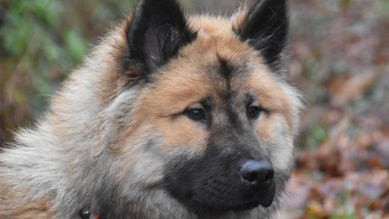Kaganiec dla psa – jaki wybrać?