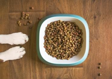 Bogata w składniki odżywcze karma dla psa