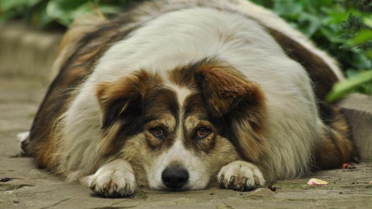 Jak rozpoznać udar u psa?