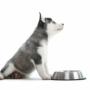 Niezbędna wyprawka dla twojego psa