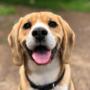 Jak karmić psa, by zachował zdrowie i piękną sierść?