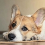 Lamblioza i giardioza u psów – profilaktyka i zapobieganie